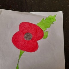 drawing of a poppy