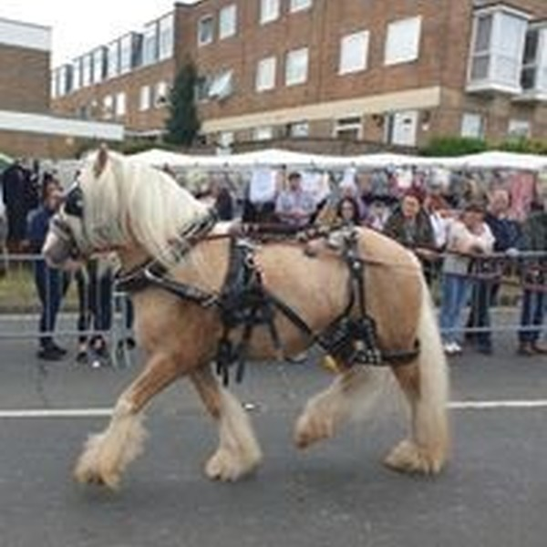 Wickham Horse Fair